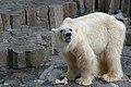 Ueno zoo, Tokyo, Japan (1285443767).jpg