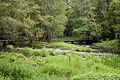 Umia River by Caldas de Reis, Galicia, Spain-2.jpg