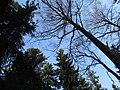 Under the trees. February 2014. - Под кронами. Февраль 2014. - panoramio.jpg