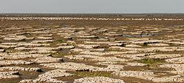 Uniek door eb en vloed steeds wisselend kweldergebied. Locatie, Noarderleech Provincie Friesland 34.jpg