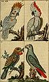 Unterhaltungen aus der Naturgeschichte (1795) (14749704055).jpg