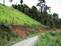 Upland rice in Yunnan Province.JPG
