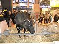 Vache Bordelaise SIA2016.JPG