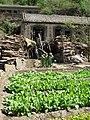 Vegetable garden (5750132091).jpg