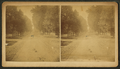 View of a road with trees, by G. G. Wiltse.png