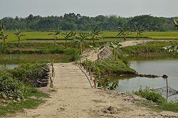 Bamboo bridge across the Ichhamati