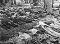 Vilnius-Maison verte-Massacre de Paneriai-2.JPG