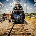 Virginia Rail Images (19609763676).jpg