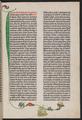 Württembergische Landesbibliothek Stuttgart Gutenberg Genesis.png