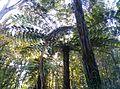 Waiatarua, Auckland, New Zealand - panoramio (3).jpg