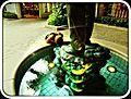 Waikīkī, Honolulu, HI 96815, USA - panoramio (47).jpg