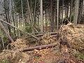Wald nach Kyrill.JPG