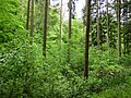 Waldlichtung bei Krummhardt-1.jpg