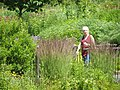 Walk in the Garden P7010501.jpg