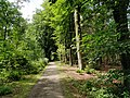 Wandelpad in Provinciaal Domein Vrieselhof.jpg