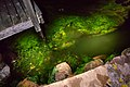 Water and algae in Norra Grundsund by the light of a flashlight.jpg