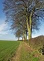 Weedley trees - geograph.org.uk - 719047.jpg