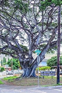 Neighborhood in Honolulu, Hawaii, United States
