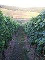 Wijngaard bij de Moesel - panoramio.jpg