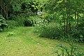 Wild garden1.jpg