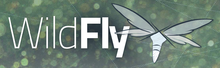 Description de l'image Wildfly_logo.png.