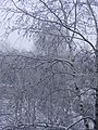 Winter in Nizhniy - panoramio.jpg