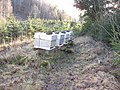 Winterised bees - panoramio.jpg