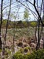 Wollgras-Moor.jpg