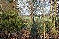 Woodland margin - geograph.org.uk - 365867.jpg