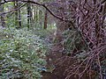 Woodland near Denton Reservoir - geograph.org.uk - 30239.jpg