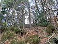 Woods north of Mugdock Reservoir - geograph.org.uk - 702090.jpg