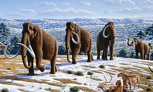 Woolly mammoths. Woolly mammoth (Mammuthus primigenius) - Mauricio Anton.jpg