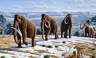 De-extinction - The woolly mammoth (Mammuthus primigenius) is a candidate for de-extinction using either cloning or genome editing.