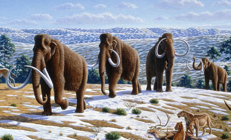 Woolly mammoth (Mammuthus primigenius) - Mauricio Antón