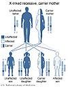 תרשים דפוס הורשה רצסיבית בתאחיזה ל-X. תרשימים כאלו מסייעים לקבוע את הסיכוי של הצאצאים ללקות במחלה או לשאת את האלל הפגום