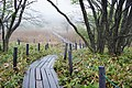 Yashimagahara Wetland02s3.jpg
