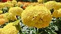Yellow Beauty!.jpg