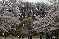 Yoshinoyama (7134455877).jpg