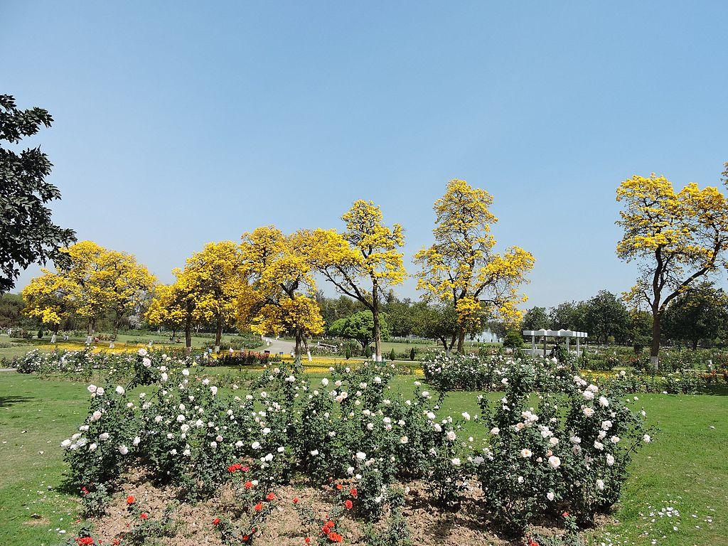 Filezakir Husain Rose Garden Chandigarhjpg Wikimedia Commons