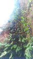 Zanja Soro e Ita Pyta Punta Cavernas 1.png