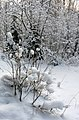Zavolzhsky District, Ivanovo Oblast, Russia - panoramio - Andris Malygin (11).jpg