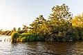 Zicht vanaf het water op de Alde Feanen van het It Fryske Gea. Waardevol natuurgebied in Friesland 29.jpg