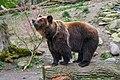 ZooSchwerin Braunbaer.jpg