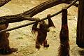 Zoo ZH DSC 6777 (2918140812).jpg