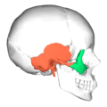 Zygomaticotemporal suture - lateral view.png