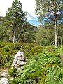 """Woodland"", Beinn Eighe Nature Reserve - geograph.org.uk - 234575.jpg"