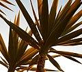 (1)Cactus 006.jpg