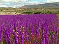 Çiçek Tarlası... - panoramio.jpg