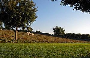 Maleme - German War Cemetery in Maleme
