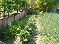 Блитва и кромид во Драчево 03.jpg